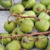 fruit-kiwai