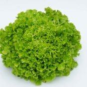 Salade frise¦üe DSC_7487