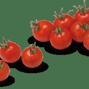 Tomate cerise 2