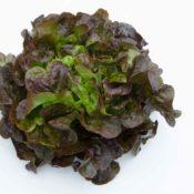 Salade Feuille de Che¦éne DSC_7502