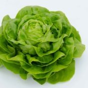 Salade laitue Pomme¦üe DSC_7494
