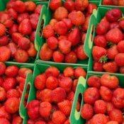 fraise-capela--dsc_7417_26935257611_o