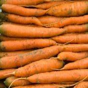 carotte--1dsc_7477_26909567552_o